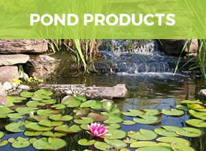Living Ponds Perth S Watergarden Specialists